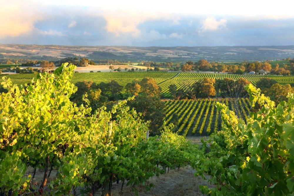 Haal Australië in huis: de lekkerste wijnen uit Australië!